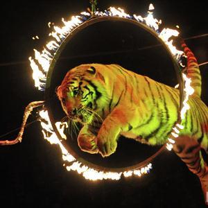 Цирки Верхней Пышмы