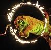 Цирки в Верхней Пышме