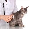 Ветеринарные клиники в Верхней Пышме